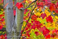 Red Tree Leaves Autumn Forest Show