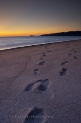 Sandy Beach Footprints Agawa Bay Sunset