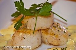 Scallops Dinner Picture