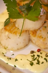 Scallops Food Picture