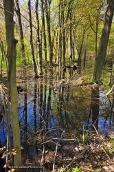 Swamp Reflections Woodland Trail Point Pelee National Park