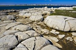 Thrombolites Newfoundland