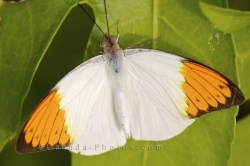 Tropical Butterfly Picture