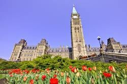 Tulips Parliament Hill Government Buildings City of Ottawa