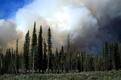 Wildland Fire Yukon