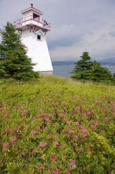 Woody Point Lighthouse Wildflowers Newfoundland