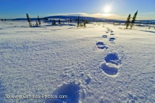 Footprints leading into the sun along the Dempster Highway in the Yukon, Canada.