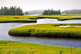 Fringed by lush green grass, the water from a river cuts rounded channels through the landscape at Clark's Harbour on Cape Sable Island, Nova Scotia.