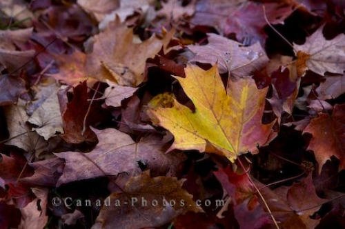 Photo: Algonquin Provincial Park Leaves Ontario
