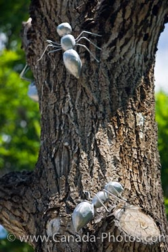 Photo: Aluminum Ants Sculpture Victoria Park Regina Saskatchewan