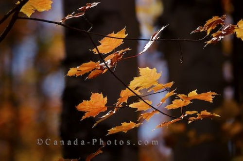 Photo: Autumn Forest Colors Rock Lake Algonquin Provincial Park