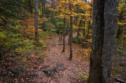 Photo: Autumn Forest Trail Ontario Canada