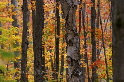 Photo: Autumn Forest Algonquin Provincial Park