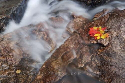 Photo: Autumn Leaves Escaping Sand River Ontario