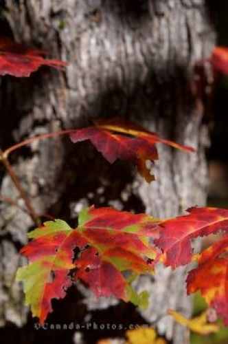 Photo: Autumn Trail Leaves Ontario Provincial Park