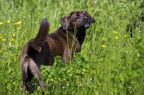 Photo: Brown Dog Canada