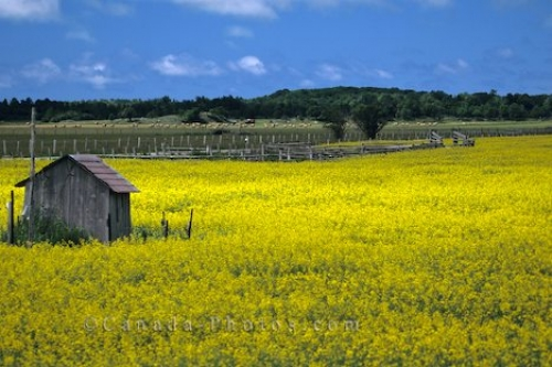 Photo: Bruce Peninsula Canola Shack