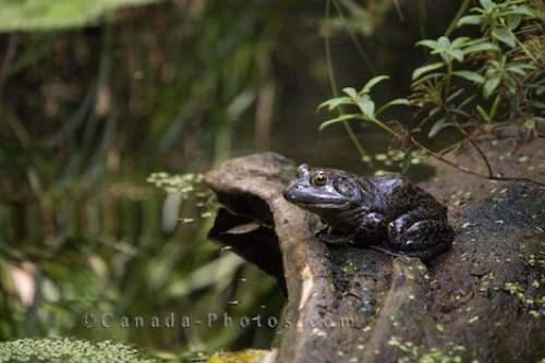 Photo: Bullfrog Biodome De Montreal Quebec