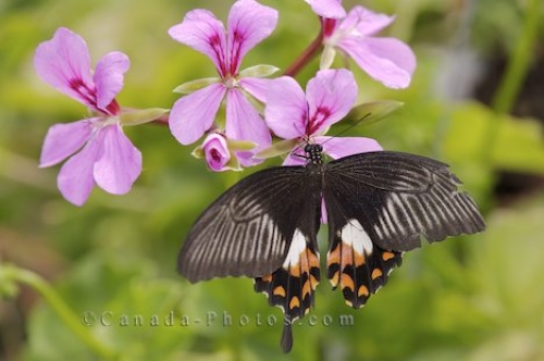 Photo: Butterfly Tropical Garden Feeding Deer Lake Newfoundland