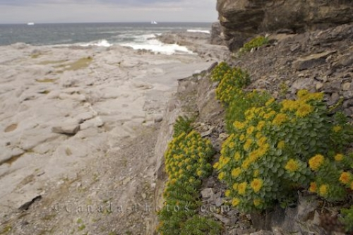 Photo: Cape Burnt Ecological Reserve Coastal Wildflowers Burnt Island Newfoundland