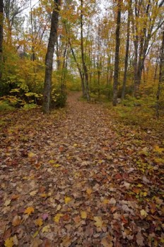 Photo: Colorful Autumn Forest Trail Ontario Canada