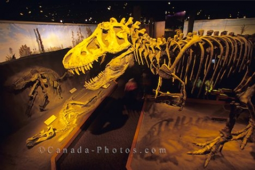 Photo: Dinosaur Skeleton Drumheller