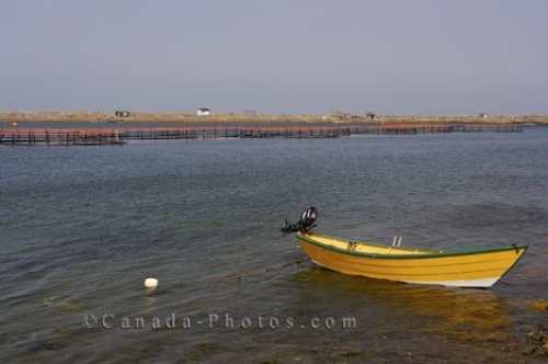 Photo: Dory Boat Fish Farm Grand Manan New Brunswick