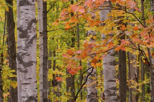 Photo: Fall Forest Changing Colours Rock Lake Ontario