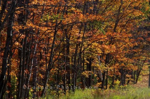 Photo: Fall Season Algonquin Provincial Park Ontario