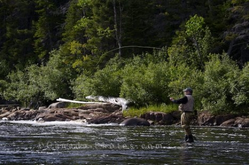 Photo: Fisherman River Fly Fishing Southern Labrador