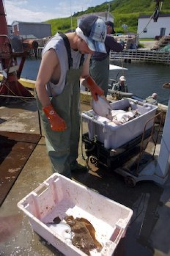 Photo: Fishing Catch Trout River Newfoundland