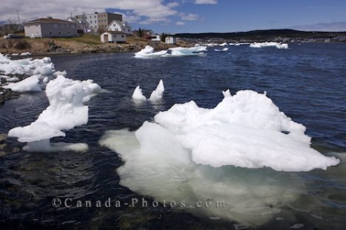 Photo: Floating Pack Ice St Anthony Harbour Newfoundland