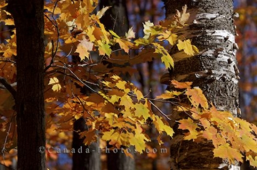 Photo: Forest Trees Autumn Colors Ontario Provincial Park