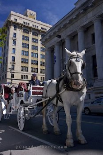 Photo: Horse Drawn Carriage Tour Old Montreal