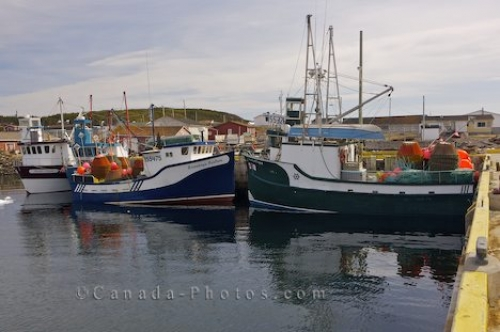 Photo: Loaded Fishing Boats Conche Harbour Newfoundland