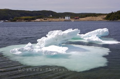 Photo: Melting Pack Ice St Lunaire Griquet Newfoundland