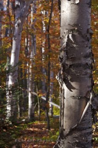 Photo: Natural Beauty Fall Forest Algonquin Provincial Park