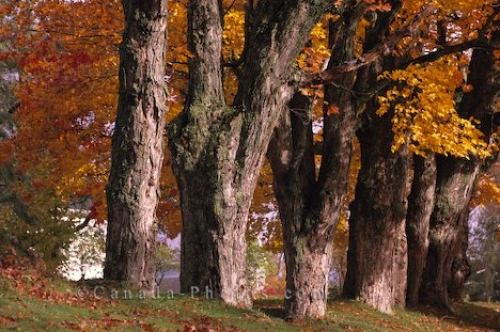 Photo: Old Trees Autumn Colours