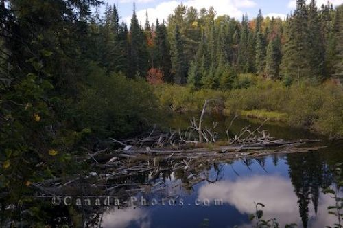 Photo: Oxtongue River Algonquin Provincial Park