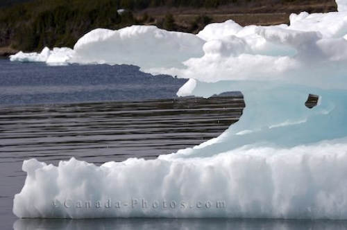 Photo: Pack Ice Formations Conche Harbour Newfoundland