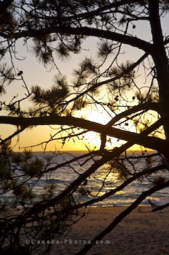 Photo: Pine Tree Sunset Lake Superior Ontario