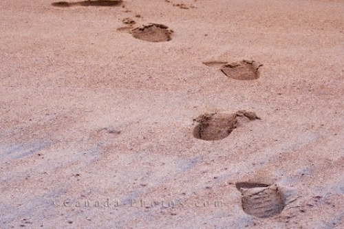 Photo: Pinware River Mouth Beach Footprints Southern Labrador