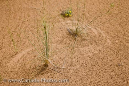 Photo: Plant Patterns Sand Dunes Spirit Sands Trail Manitoba