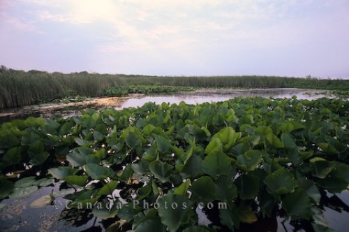 Photo: Point Pelee National Park Ontario