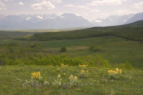Photo: Waterton Prairie Scenery Southern Alberta Canada