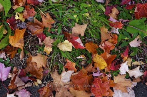 Photo: Quebec Fall Leaves La Mauricie National Park