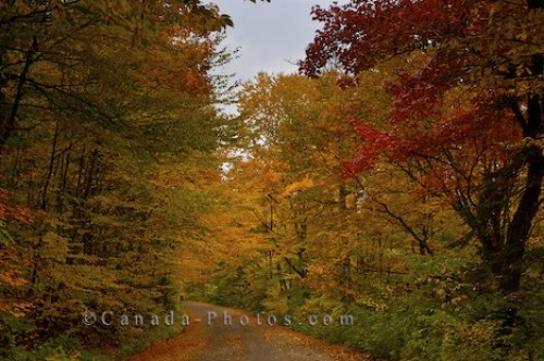 Photo: Quebec Fall Trees Jacques Cartier Park