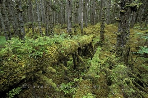 Photo: Rainforest Naikoon Park British Columbia
