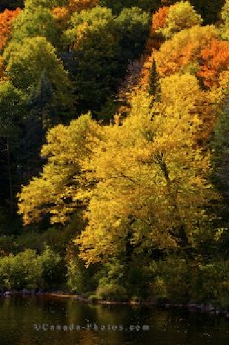 Photo: Jacques Cartier River Fall Colours Quebec Canada