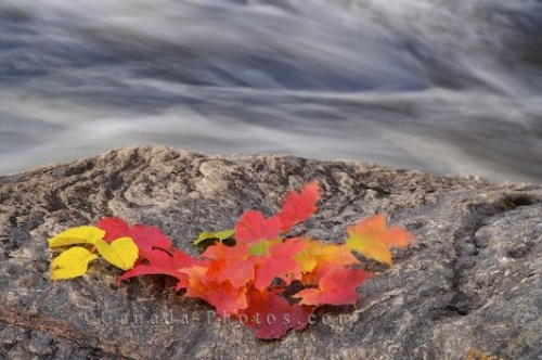 Photo: Rock Leaves Lake Superior Provincial Park